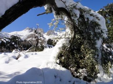 Olivier sous la neige_ph-Agoumatine.jpg