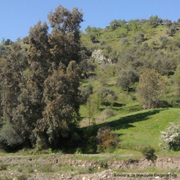 Environs de Makouda_ph-AlgerieTele.jpg