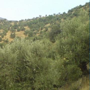 El-Flaye_environs.jpg